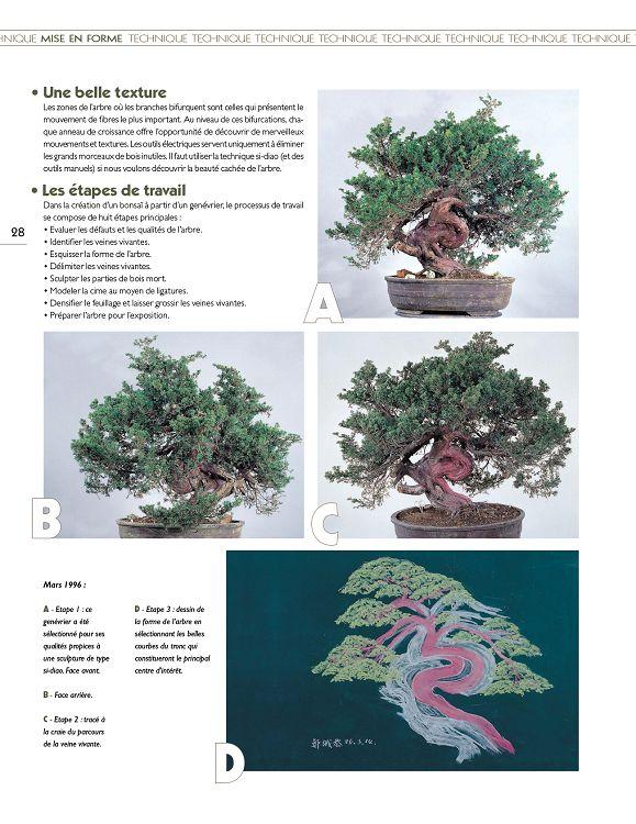 50 Pcs Graines Genévrier Pinus densiflora Bonsai en pot Pine Tree Maison Jardin Neuf D