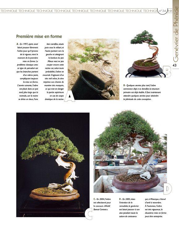 outils bonsai masakuni