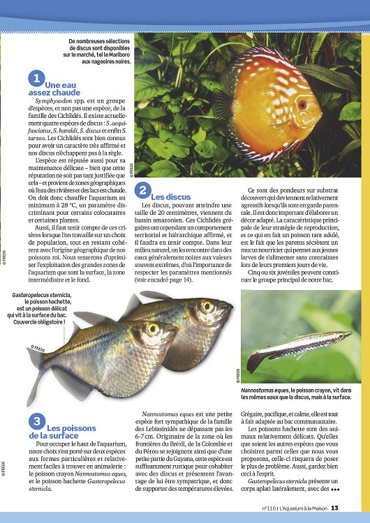 L 39 aquarium la maison n 112 nov d c 2015 page 60 61 for Aquarium a la maison pdf