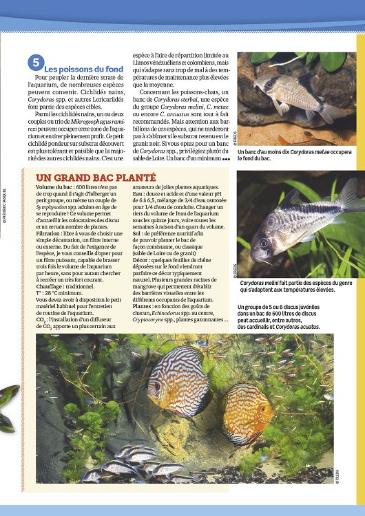 L 39 aquarium la maison n 112 nov d c 2015 page 12 13 for Aquarium a la maison pdf