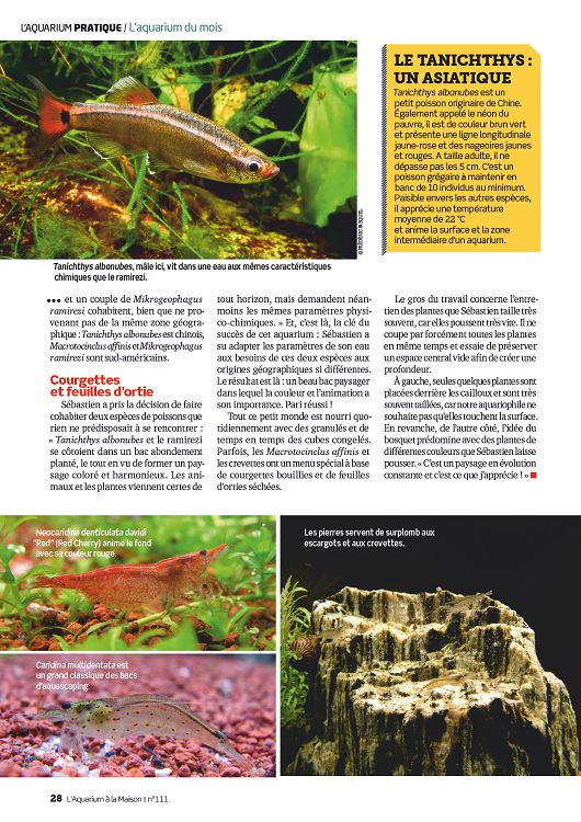 L 39 aquarium la maison n 112 nov d c 2015 page 40 41 for Aquarium a la maison pdf