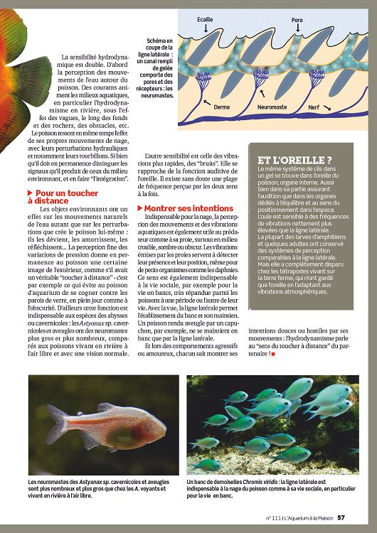 L 39 aquarium la maison n 112 nov d c 2015 page 6 7 l for Aquarium a la maison pdf