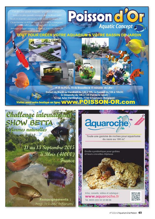 L 39 aquarium la maison n 112 nov d c 2015 page 64 65 for Aquarium a la maison pdf