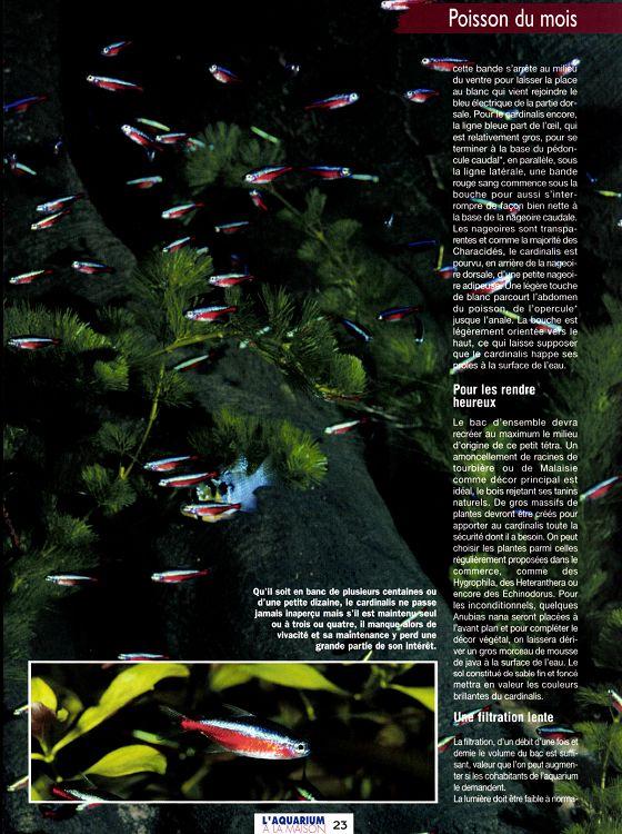 poissons domestiques liste