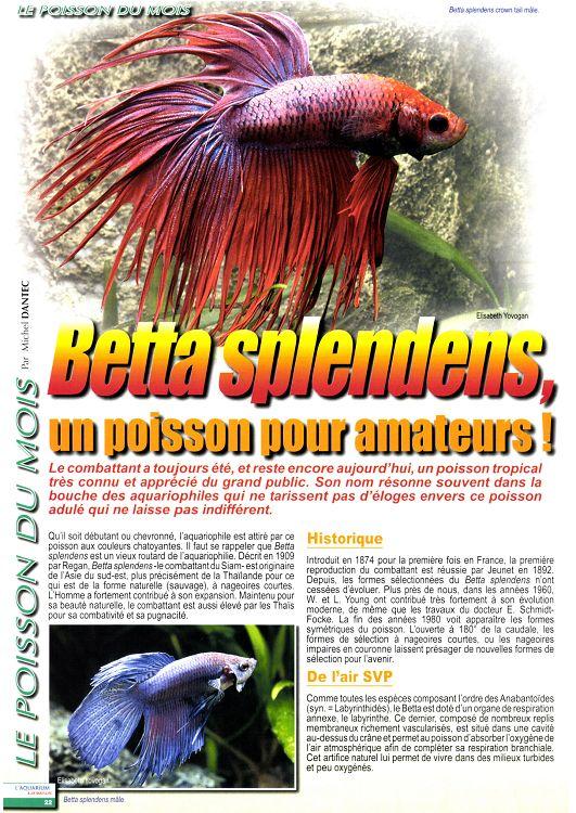 combattant poisson durée de vie