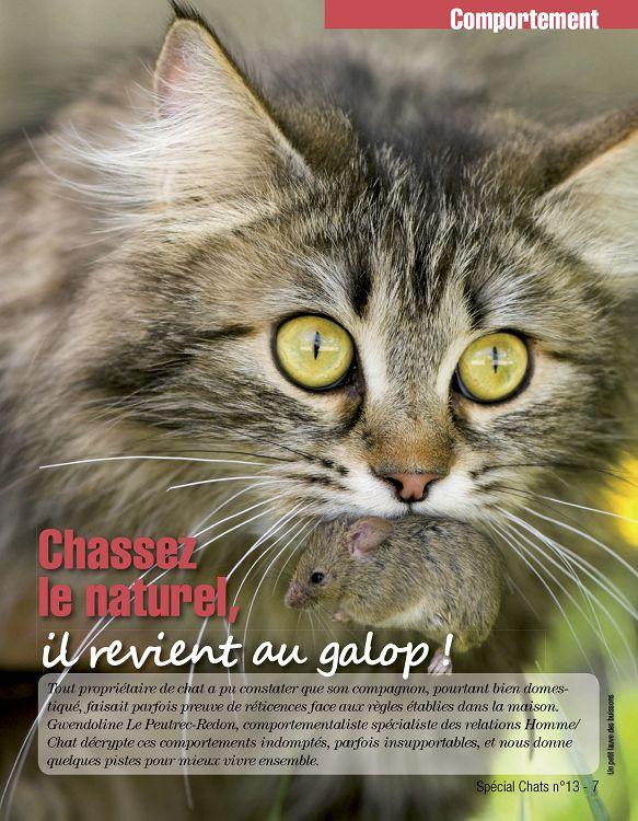 comportementaliste chat lyon