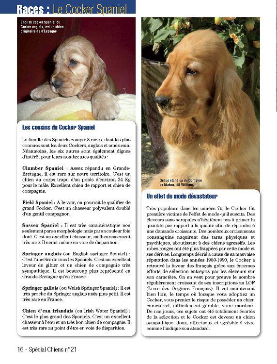 Coloriage Chien Springer.Special Chiens N 21 Mai Jun Jui 2013 Page 16 17 Special Chiens