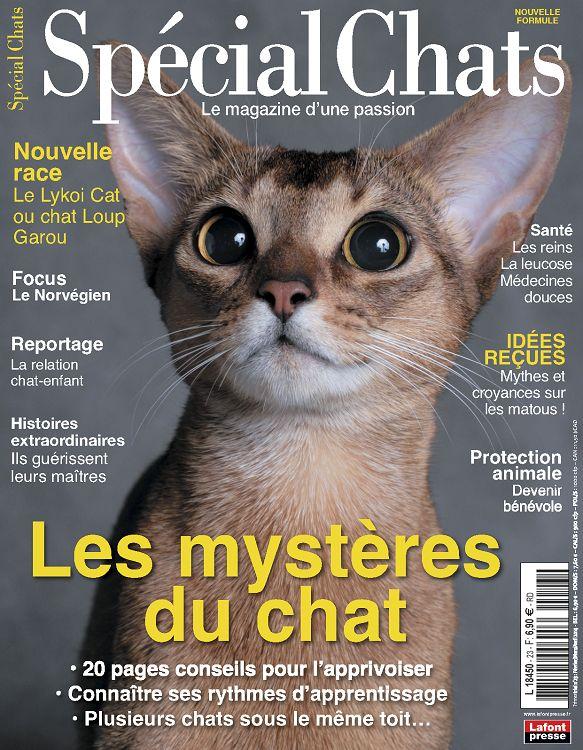 Race Chat Loup Garou ou Chat Loup Garou Focus